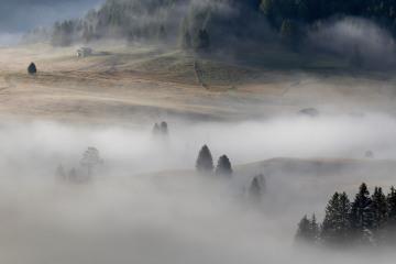 Ochtendmist op Alpenweide © Steven Warmoes