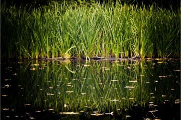 Reflection © Andre Van den Bossche