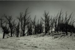 Dry land © Andre Van den Bossche