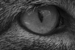 Eye of the tiger © Katrijn De Vos