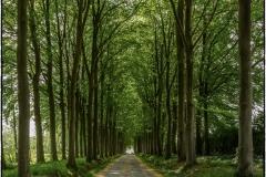Castle lane © Florent Baele