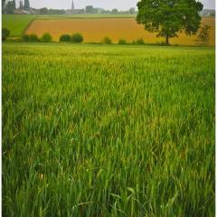 Sint-Goriks © Jorn Brewaeys