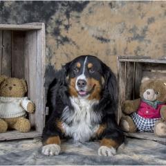 Drie beren © Ann Bonte