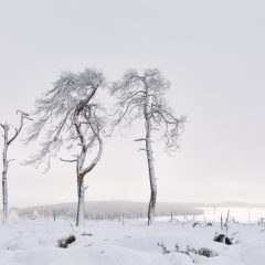 Naked Treesome © Christa Martens