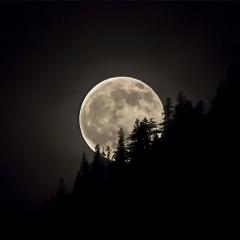 Maan in Himalaya © Steven Warmoes