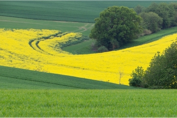 Green green grass of .... © Patrick Haegens