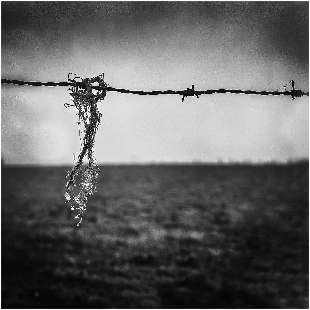 Dauw © Ivan Debbaut