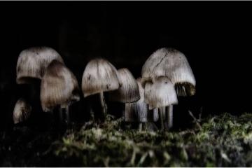 Midnight © Sonja Van Aerde