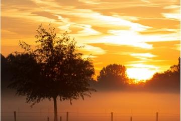 De Zotte Morgen © Patric Haegens