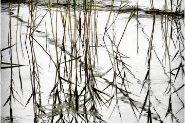 Detail van een Landschap © Jackie De Clercq