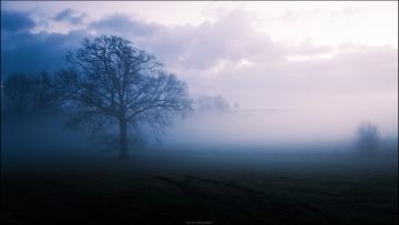 Steenbergse bossen © Jorn Brewaeys