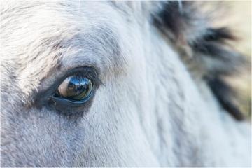 An eye for an eye © Marc Ganseman