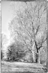 Treed-uit-de-schaduw © Robert Van Maele