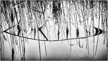 B-Oog © Robert Van Maele