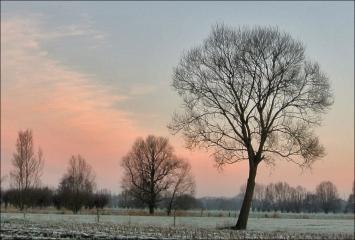 Roze lucht © Stefanie Wille