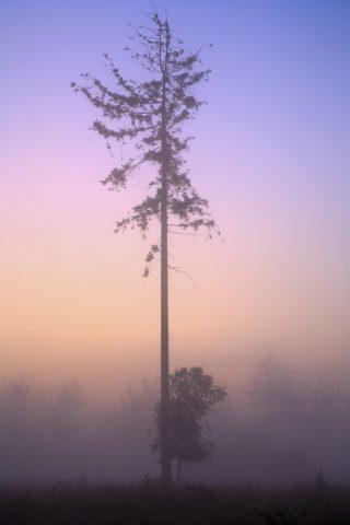 Shoot - De kracht van verticale beelden