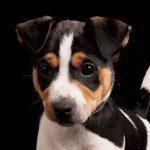 portretfotografie hondje