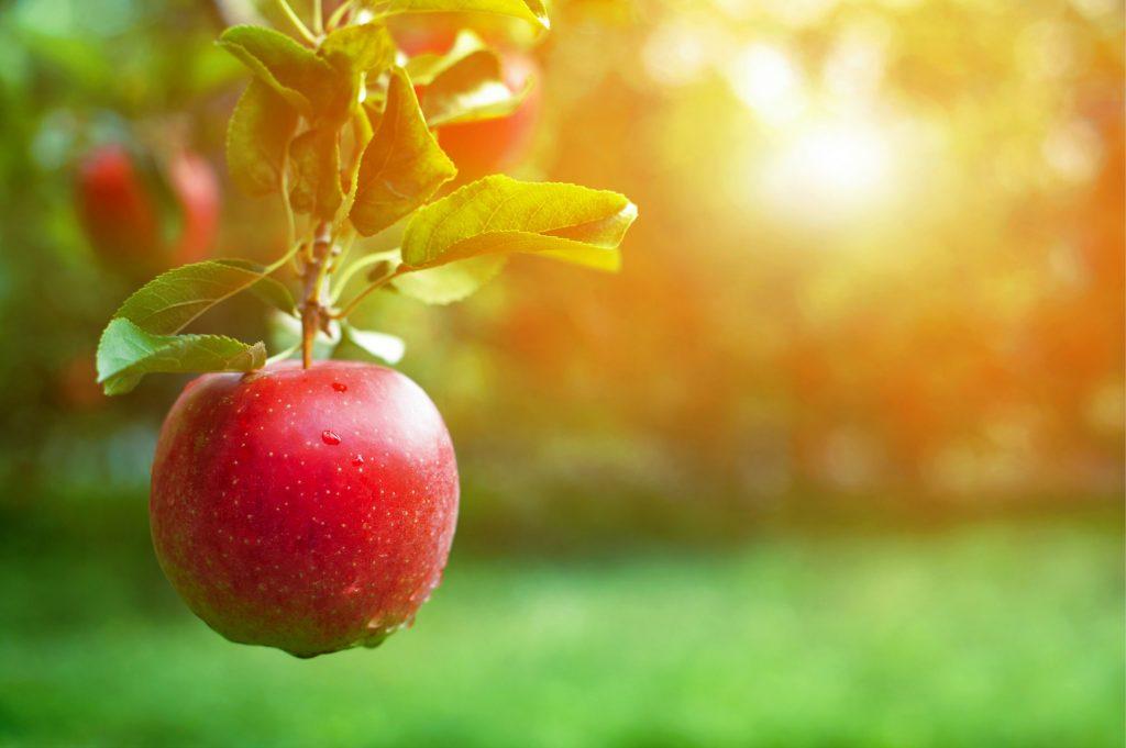 Matsvinn - Framtidens hållbara matsystem nr 1 2020