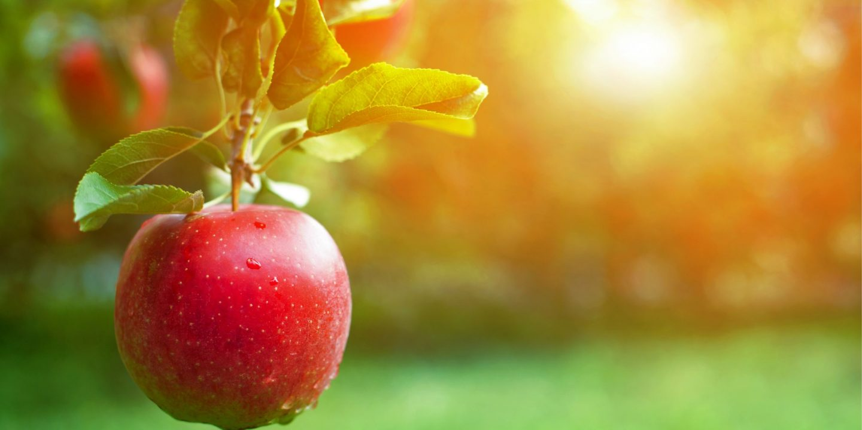 Matsvinn - Framtidens hållbara matsystem nr 1, 2020