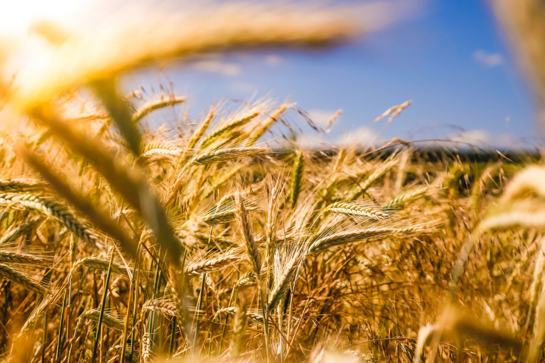 Framtidens jordbruk