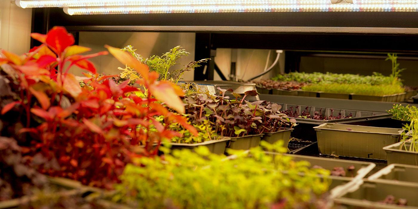 Farmy, ett av många foodtech-bolag iStockholm