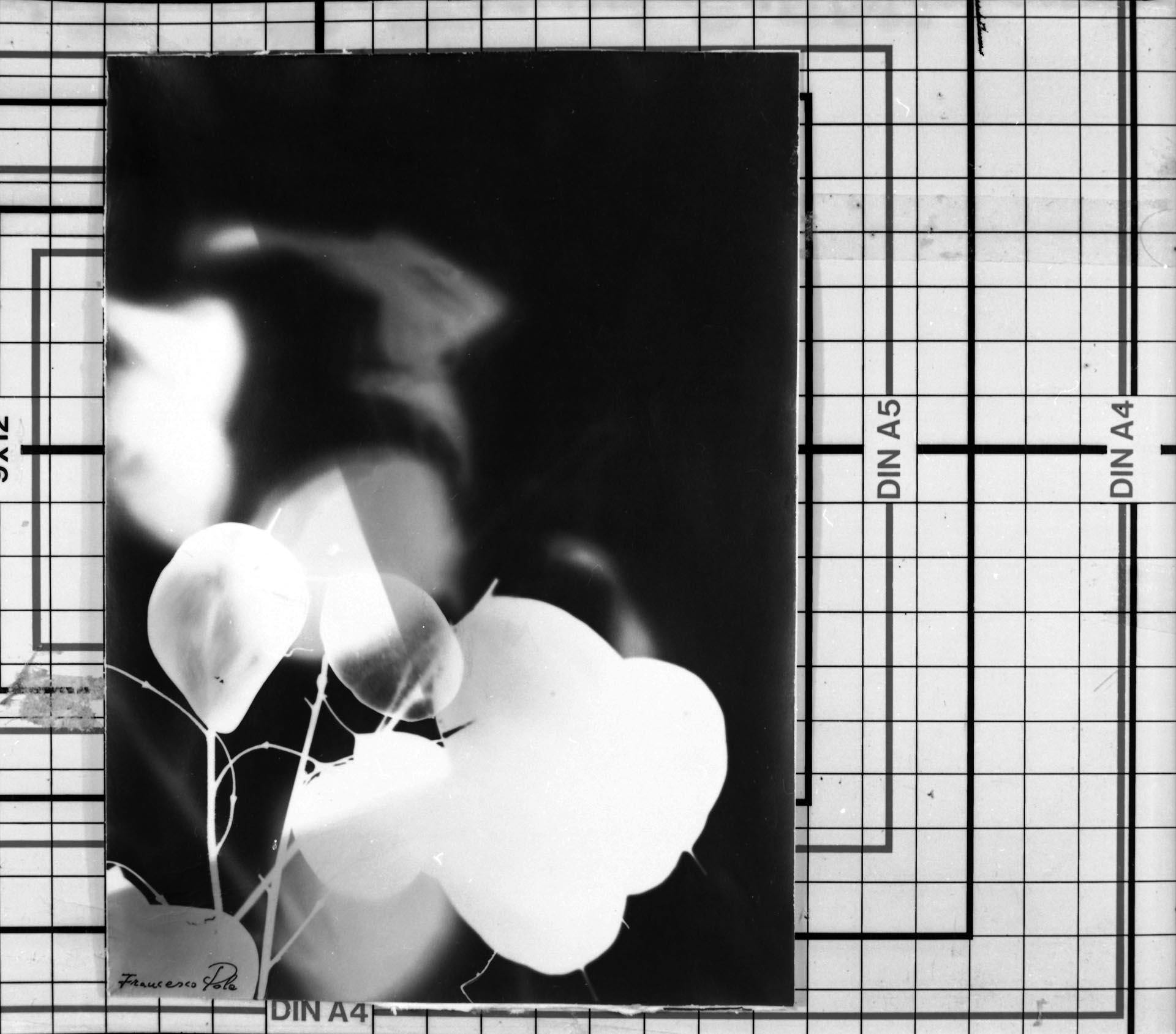 Fiori di Luna-Fotogramma 1988