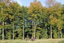 Photo of Kommunal skov til både afslapning og aktivitet, natur og skovbrug – Sønderskoven.