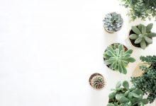 Photo of Fem planter der er perfekte til badeværelset