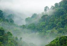Photo of Verdens Skoves håb for den nye regering: En ny retning for både natur og klima