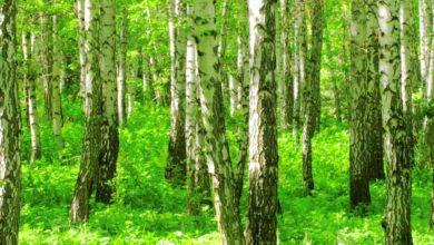 Photo of Virksomheder træd varsomt: CO2-kompensation er ikke et quick-fix