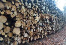 Photo of Vi skal skære drastisk ned i forbruget af biomasse