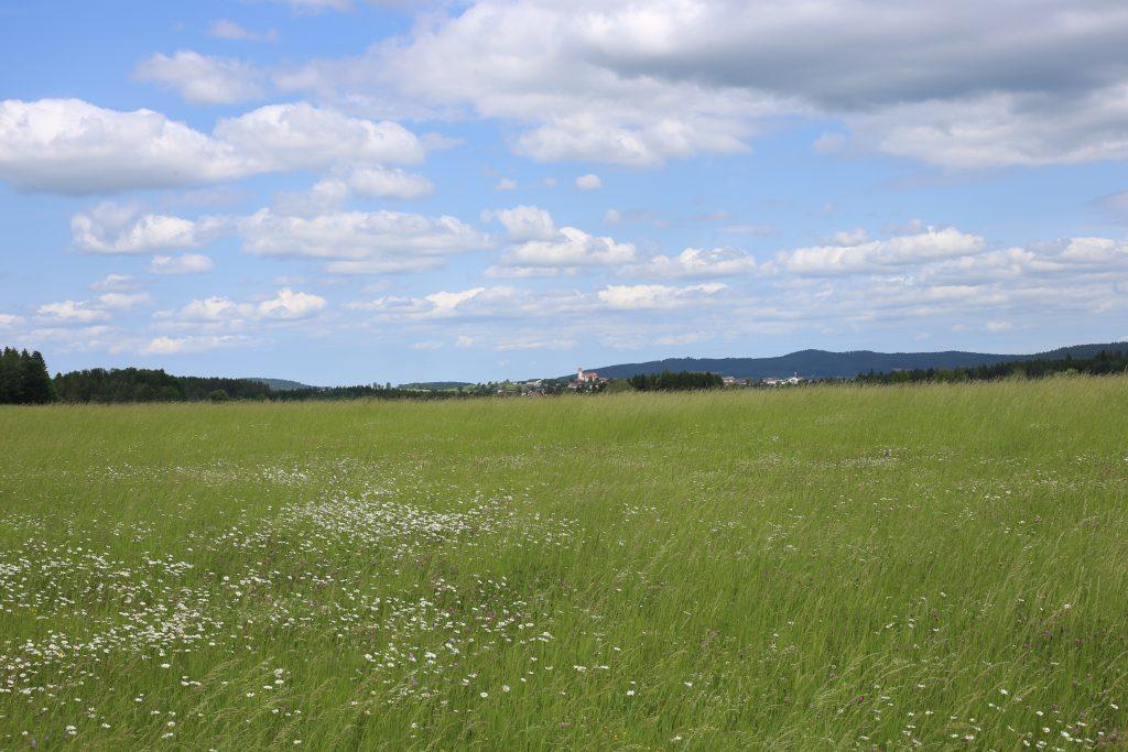 grüne Wiese mit Blumen, dahinter ist Rainbach