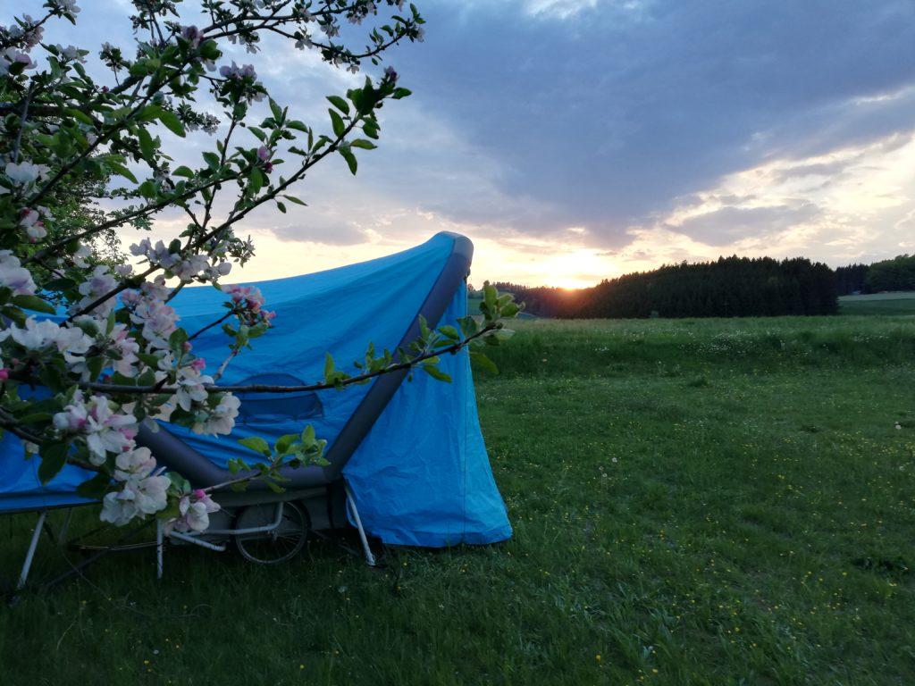 blau, Apfelblüte, Gutau