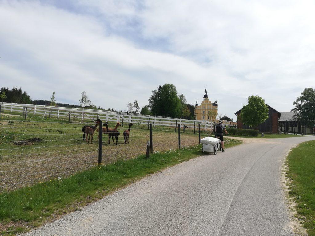 im Hintergrund Tannbach, Gutau