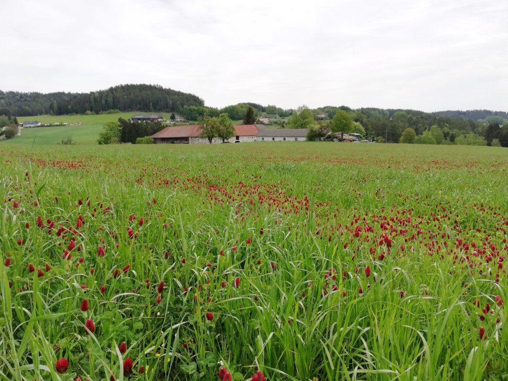 nach Gutau, Bauernhof