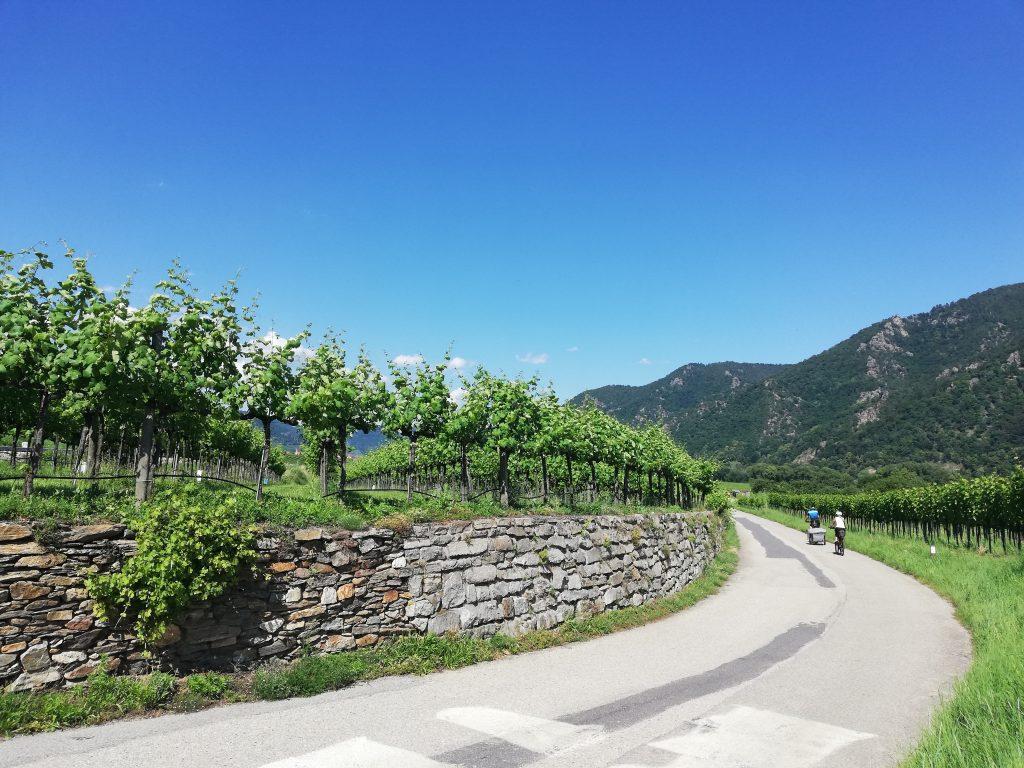 Weinberge Wachau