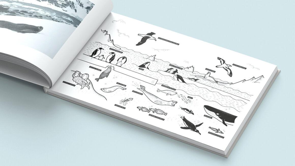 Buchillustrationen Projekt: Antarktis
