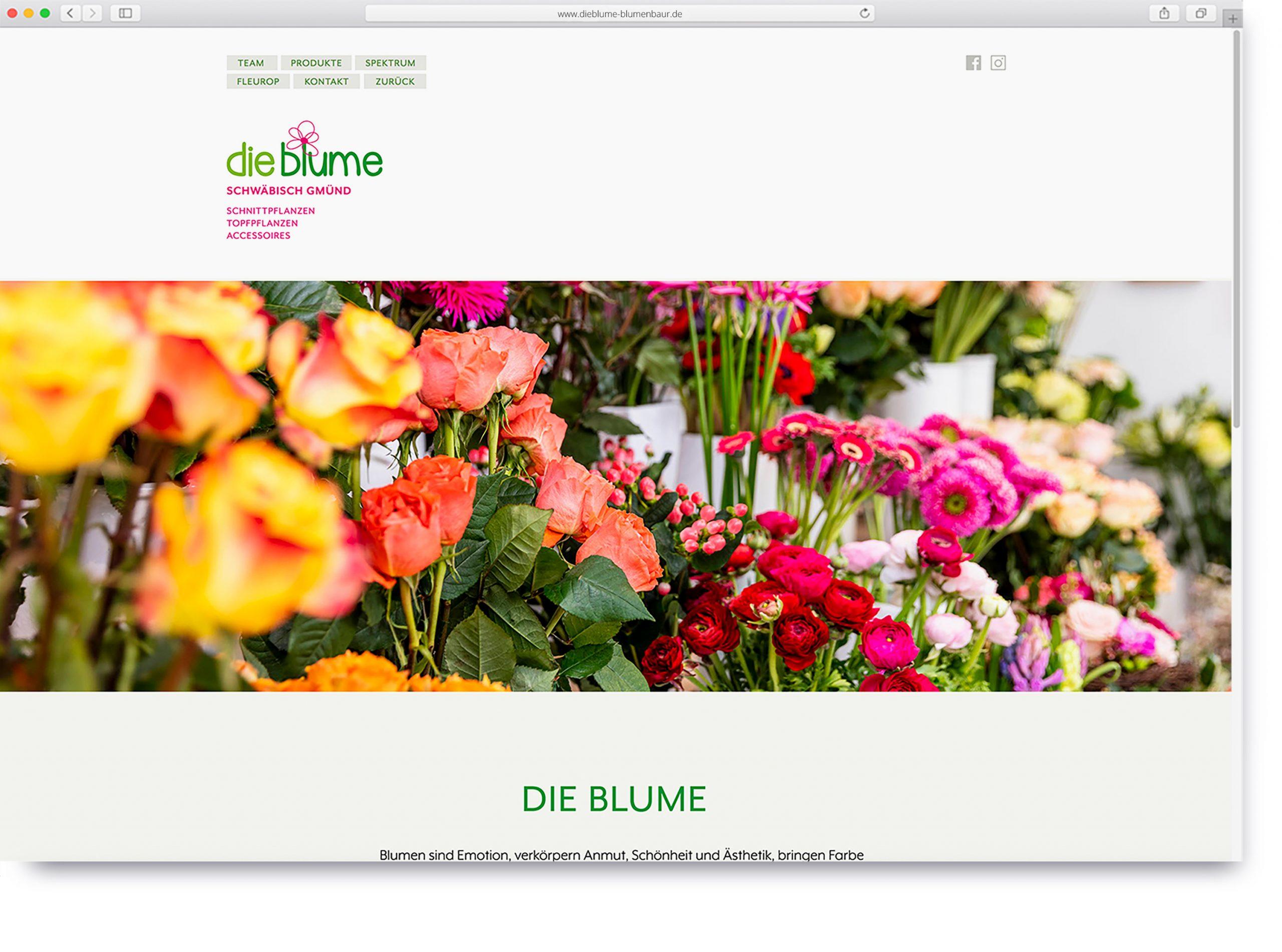 dieblume-blumenbaur-website-2-scaled.jpg