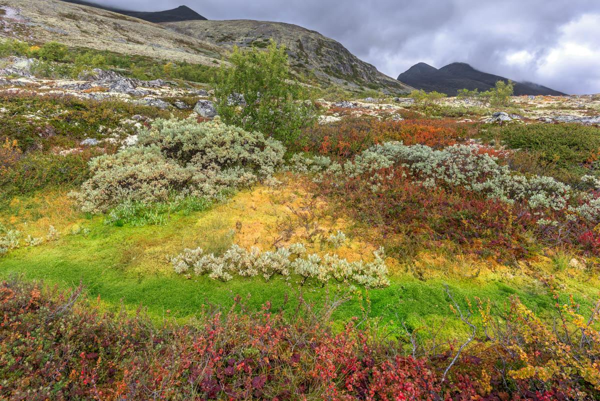 Rondane & Dovrefjell i höstskrud.