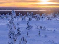 Solnedgång över vinterlandskapet i Riisitunturi nationalpark.