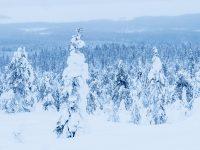 Utsikt över Riisitunturi nationalpark.