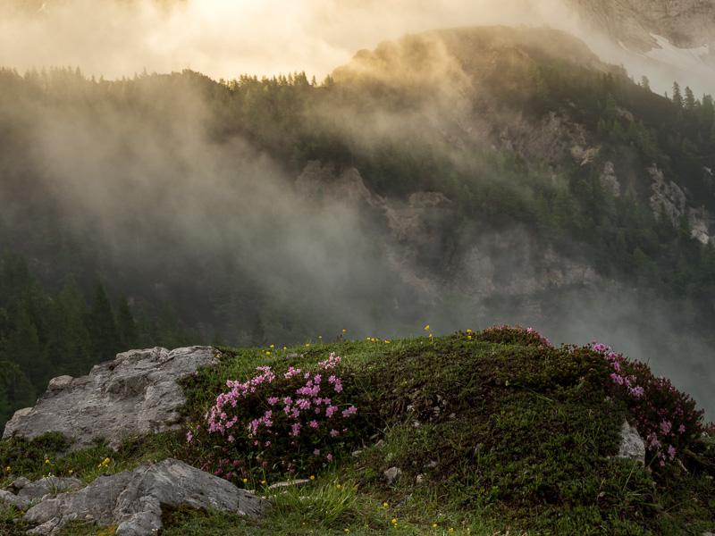 Lila blomster och dimma, Slovenien