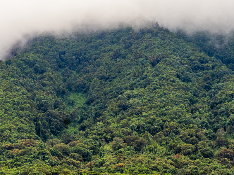 Dimhöljda Virungabergen. Fröstad Naturfoto. Uganda.