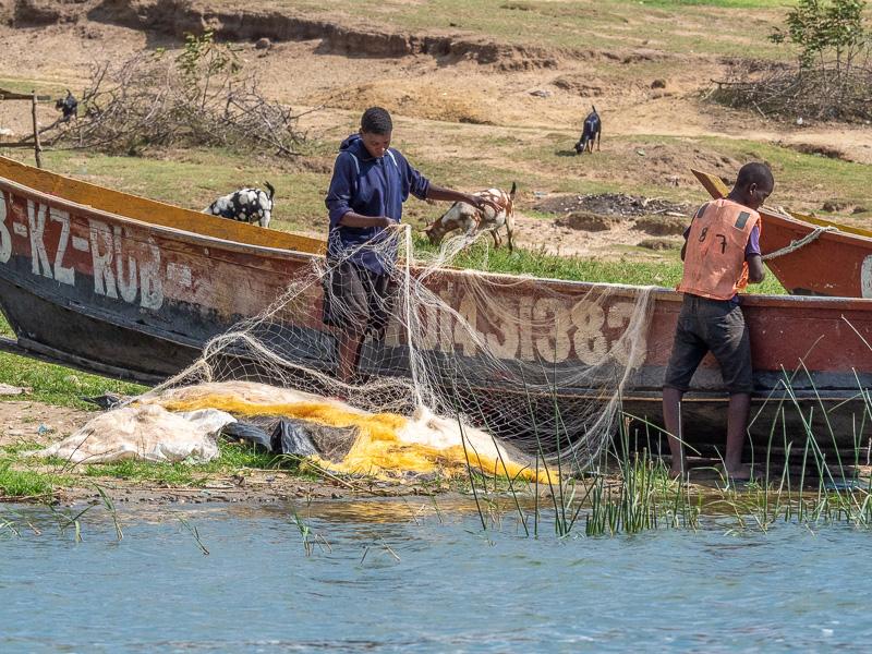 Människor arbetar med fiskenät. Fröstad Naturfoto. Uganda.