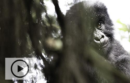 Naturfilm_Uganda