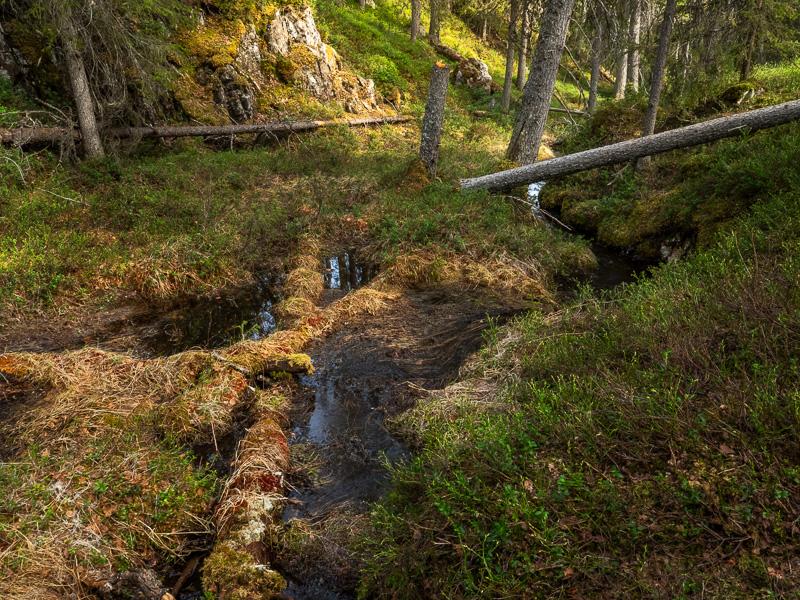 Gammelskog, Finland.