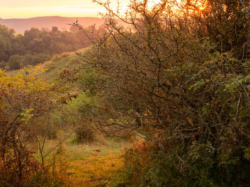 Buskar i soluppgång.