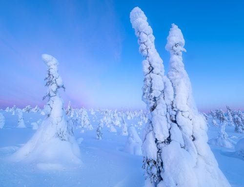 Gratis föreläsning om Riisitinturi nationalpark och myskoxarna på Dovrefjell.