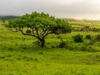 vacker soluppgång över savannen.