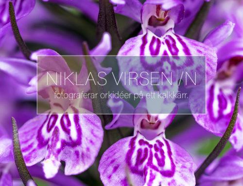 Fotograferar orkidéer på ett kalkkärr.